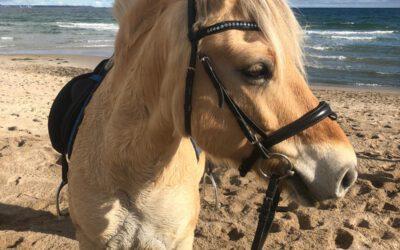 Pony Nr. 1