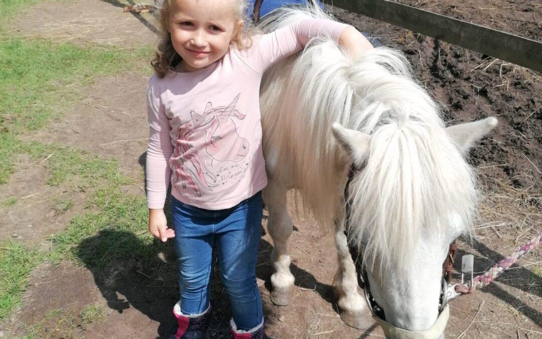 Pony Nr. 2